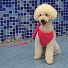 Huisdier kleding monochroom Mesh Harness leiband hond borst bretels met 120x1.5cm tractie touw  groot formaat  buste: 36-68cm