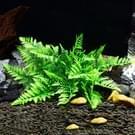 Kunstmatige boom Plant gras beeldjes miniaturen Aquarium Fish Tank landschap  grootte: 13 0 x 27 0 cm