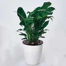 Lui bloempotten automatische waterabsorberende Hydroponic potplanten circulaire hars kunststof bloempotten dubbellaags ontwerp zelf drenken planter  diameter: 12cm  hoogte: 12.2 cm (wit)