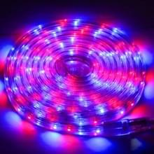 Behuizing waterdicht Rope Light  lengte: 3m  RGB Light 3528 SMD LED  60 LED/m  AC 220-240V