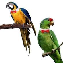 2 PC'S creatieve handgemaakte aangepaste Parrot kraag Bow tie  specificatie: XL