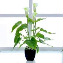 Kunstmatige bloem Calla plant ingegoten huis decoratie groene plant (wit groen)